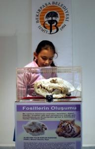 sahtefosil1